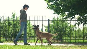 Treinamento de um cão vídeos de arquivo