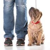 Treinamento do cão imagem de stock