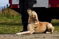 Treinamento do cão Imagens de Stock