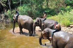 Treinamento do elefante, santuário Fotos de Stock