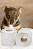 Treinamento do toalete do animal de estimação Foto de Stock