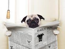 Treinamento do toalete do animal de estimação Foto de Stock Royalty Free