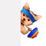 Treinamento engraçado do cão com o barbell atrás da bandeira Fotografia de Stock Royalty Free