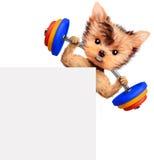 Treinamento engraçado do cão com o barbell atrás da bandeira Imagens de Stock Royalty Free