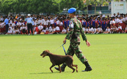 Treinamento militar do cão Imagens de Stock