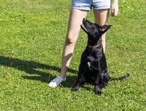 Treinamento preto do cachorrinho com jovem mulher Fotos de Stock