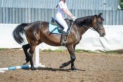 Treinando na equitação, nível básico Cavaletti em um trote Fotografia de Stock Royalty Free