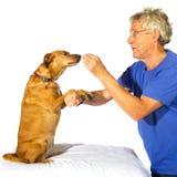 Treinando o cão Imagem de Stock