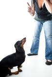 Treinando o cão Imagens de Stock Royalty Free