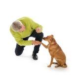 Treinando o cão Foto de Stock Royalty Free