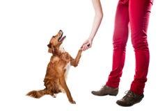 Treinando o cão para dar cinco Imagem de Stock Royalty Free