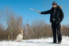 Treinando um cão de Labrador do retriever fotos de stock