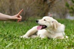 Treinando um filhote de cachorro Imagens de Stock