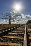 treine a trilha com a árvore secada à esquerda e à plantação do cana-de-açúcar à direita com enfrentar do sol imagem de stock royalty free