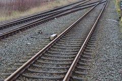 Treinen, spoorwegen en treinen in Duitsland stock afbeelding
