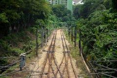 Treinlijnen door stadsbomen Stock Fotografie