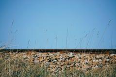 Treinspoor van de kant met grassen in de voorgrond Stock Afbeelding