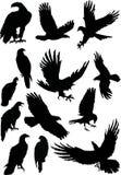 Treize silhouettes d'aigle Image libre de droits