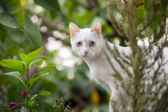 Trek aard` s wonder dieren aan Royalty-vrije Stock Fotografie