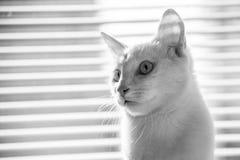 Trek aard` s wonder dieren aan Royalty-vrije Stock Foto's