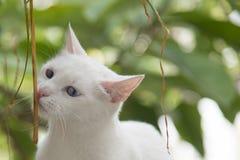 Trek aard` s wonder dieren aan Royalty-vrije Stock Foto