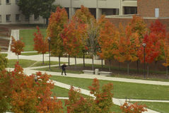 Trek Across Campus. Lone student walking across a college campus in autumn Royalty Free Stock Images