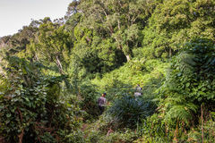 Trek dans la jungle africaine profonde photos stock