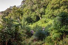 Trek in i den djupa afrikanska djungeln arkivfoton