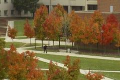 Trek over Campus Royalty-vrije Stock Afbeeldingen
