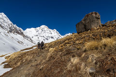 Trek to Annapurna Basecamp Royalty Free Stock Photography