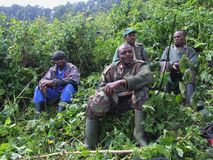 Trek van de gorilla stock foto's