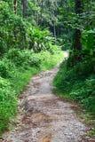 Trek van Jugnle van het regenwoud Stock Afbeeldingen