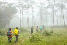 Treking en brouillard de forêt tropicale du nord-est image stock
