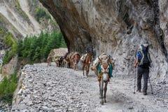 Trekker auf Annapurna-Stromkreis in Nepal stockbild