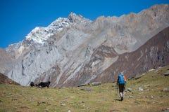Trekker auf Manaslu-Stromkreiswanderung in Nepal Lizenzfreies Stockfoto
