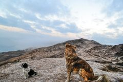 The trekker dogs royalty free stock photo