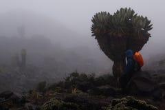 Trekker en Kilimanjaro Fotos de archivo libres de regalías