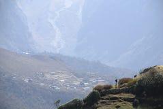Trekker Everest Himalaya Nepal Foto de archivo libre de regalías