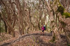 Trekker in the forest on the way to Annapurna base camp, Nepal Royalty Free Stock Images