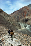 Trekker in Ladakh, Himalayagebergte. stock foto's