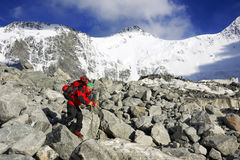 Trekker in montagne di Altai, picco di Belukha Immagine Stock
