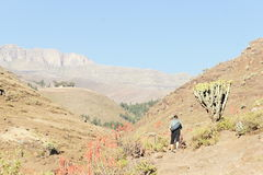 Trekker in Simien mountains near Chiro Leba village Royalty Free Stock Photos