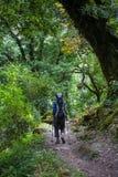 Trekker w lesie na Manaslu obwodu wędrówce w himalajach Zdjęcia Stock