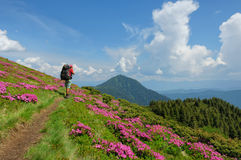 Trekker walking flowers field in mountain Stock Photo