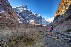Trekker on the way to Annapurna base camp, Nepal Stock Images