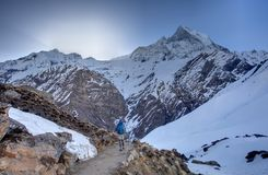 Trekker on the way to Annapurna base camp, Nepal Royalty Free Stock Image