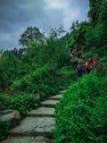 Trekkers идут на каменный путь между кустарниками стоковые изображения rf
