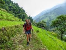 Trekkers between rice fields. Marsyangdi river valley - Annapurna Circuit trek - Nepal royalty free stock photography