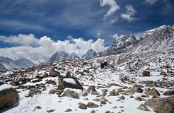Trekkers in Sagarmatha National park, Nepal Stock Photo