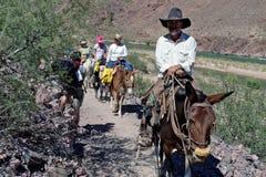 Trekkers van de muilezel gaan een wandelaar, Grote Canion, AZ, de V.S. over Royalty-vrije Stock Afbeeldingen